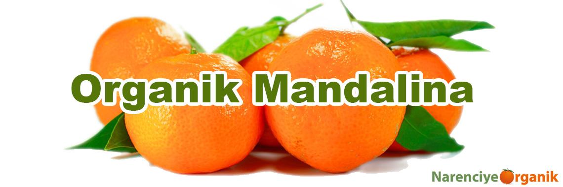 Organik Mandalina